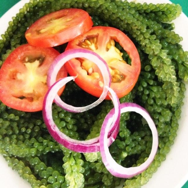 Lato (seaweeds)