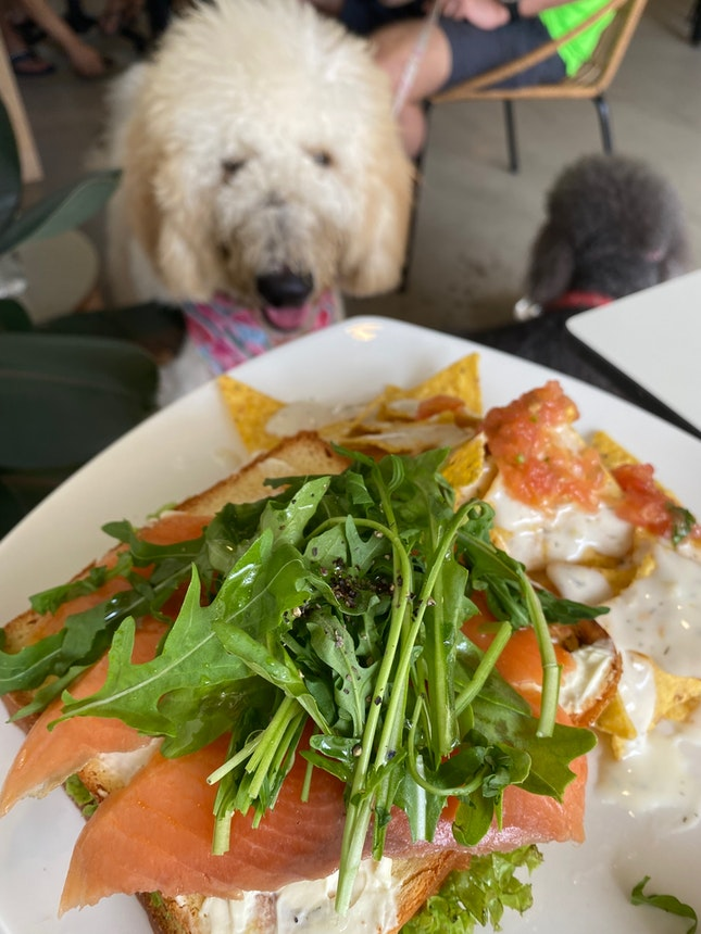 Great Place For Pet Brunches