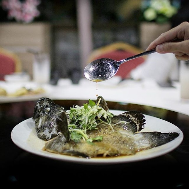 Steamed Garoupa Fish in HK Style🐟 Prized by the Cantonese for steaming, Garoupas are known for its delicate, tender and firm  white flesh.