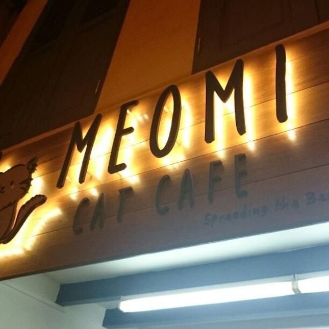 Ethical Cat Cafés in Singapore
